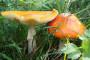 Sezona gljivarenja donijela prve žrtve
