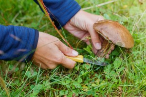 Želite li brati gljive u šumi, ovo morate znati