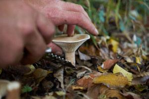 Izgubio se u šumi dok je brao gljive, a preživio jedući ih