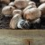 Uzgajat će gljive na talogu od kave!