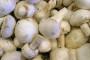 Proizvede i rasproda stotinu tona gljiva