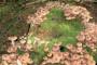 Gljive truležnice u voćnjaku i vinogradu