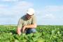 Donesena rješenja za uništavanje GMO usjeva!
