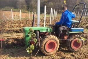 Jesenja gnojidba važna mjera kod uzgoja drvenastih voćarskih kultura