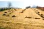 Gnojidba travnjaka organskim gnojivima
