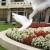 Beli golubovi imaju široku namenu - od vojne do slavljeničke