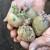 Prije sadnje krumpira obavite mjere zaštite od bolesti i štetnika