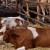 Kako pomoći životinjama kad nastupe visoke temperature?