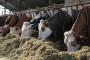 Koliko je stočarima važna higijena štale?