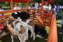 Zanimljiva Gradska farma ove subote u Osijeku