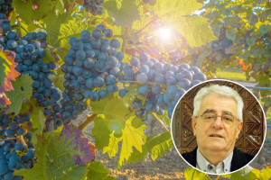 Kišan rujan - vinogradar uzrujan: Nema brige, čekaju nas vrući dani