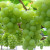 Zaštita vinove loze prije i poslije cvatnje