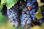 Hrvatska ima znatan višak vina