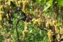 Kalkulacije vinogradarskih i vinarskih kultura 2012