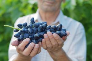 Rejonizacija i Vinogradarski registar za kvalitet grožđa i vina