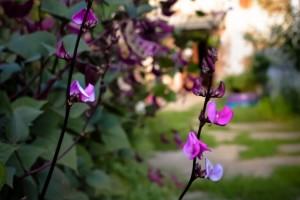 Vertikalan uzgoj povrća i jestivog cvijeća - dekorativno i praktično