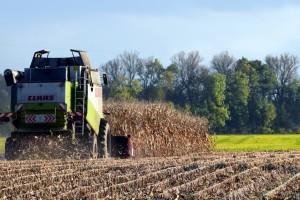 Ove godine pala proizvodnja kukuruza za devet, soje za 5,3 posto?