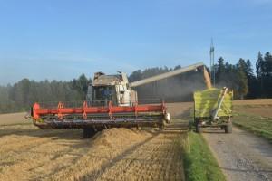 Prosječni trošak proizvodnje žitarica u EU je 635 eura po hektaru