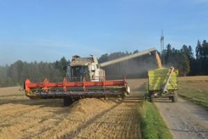 Prosječni trošak proizvodnje žitarica u EU je 635 evra po hektaru