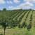Postoji li ekološka poljoprivreda u Hrvatskoj?