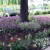 Cveće koje uspeva u hladovini ispod drveta