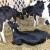 Što podrazumijeva pravilna hranidba stoke?