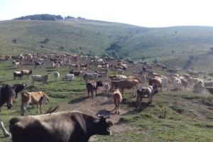 Udruga krški pašnjaci: Prioritet treba biti upis preostalog poljoprivrednog zemljišta u ARKOD