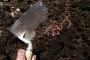 Optimalan sadržaj humusa - garancija plodnosti tla