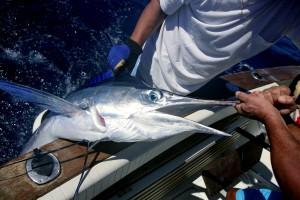 Prijedlog pravilnika o sljedivosti za plavoperajnu tunu i igluna