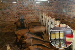 Vojo Pepić, povratnik iz inostranstva veliku šansu vidi u kozjim proizvodima