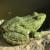 Žabe su najbolji insekticid u vrtu - kako ih privući