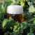 Hmelj: Ono što pivu daje aromu