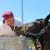 Vinova loza, masline i smokve - Tri eko gracije Dalmacije Poljoprivredne zadruge MasVin
