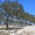 U Hrvatskoj stablo masline prosječno da 1 litru ulja?