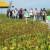Na Danima polja soje Axereal predstavio i nove sorte - u prodaji od iduće godine