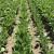 Koje korake slijediti za sigurnu primjenu sredstava za zaštitu bilja
