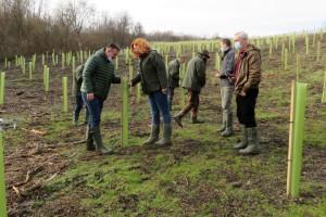 Obnova šuma na novogradiškom području, pomažu i sredstva Europske unije