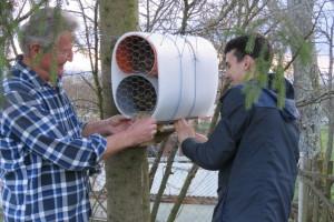 Josip 11 godina uzgaja solitarne pčele, jedna ima učinak kao 120 radilica medonosne pčele?