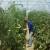 U avgustu međunarodni seminar o organskoj proizvodnji povrća za male proizvođače