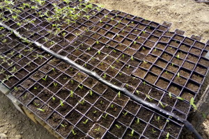 Dozvoljena sredstva u zaštiti bilja u organskoj proizvodnji