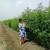 Uzgoj industrijske konoplje se isplati tri puta više nego uzgoj kukuruza