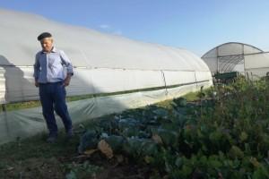 Mujo Omanović: Toplo vrijeme odgovara povrću u plastenicima