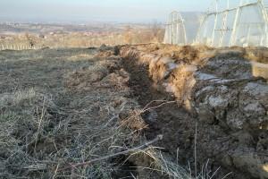 Zelenišno đubrivo dobro za nadoknadu organske materije u zemljištu