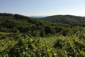 Svetske šume: Za 30 godina izgubljeno 178 miliona hektara