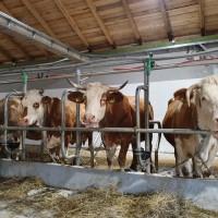 Konji, farma krava i sirana - recept za borbu protiv poražavajuće demografske slike