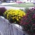 Koje cveće saditi u jesen, a kako ostalo spremiti za zimu?