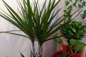 Sobne biljke za čišći zrak: Koje i koliko ih je dovoljno u prostoriji?