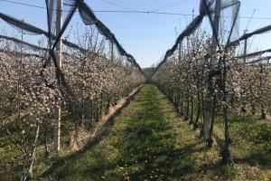 U voćnjacima Frane Ivkovića nezapamćeno niske temperature pomele 6 milijuna kuna!