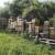 Bakfast ili karnika - šta misle pčelari?