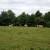 Jurina mala farma: Pokrenuo GoGetFunding kampanju da bi kravama osigurao novu staju